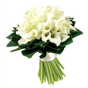 Заказ цветов каллы в офис живые цветы брянск, брянская область